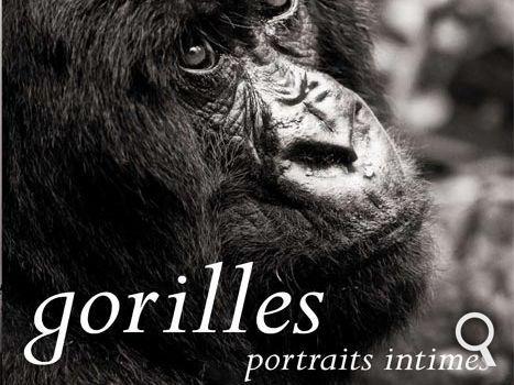 Ce livre, dont sont tirés tous ces clichés, cache encore bien d'autres portraits de gorilles, plus beaux les uns que les autres. Il est signé par Florence Perroux, responsable de la conservation et de la pédagogie au zoo de La Palmyre, et de Sébastien Meys, photographe animalier spécialisé dans les primates, et plus particulièrement les grands singes. © Sébastien Meys