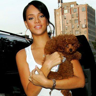 Rihanna met haar hondje