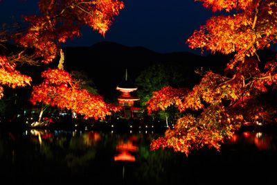 ■大覚寺 :秋の京都紅葉ライトアップ