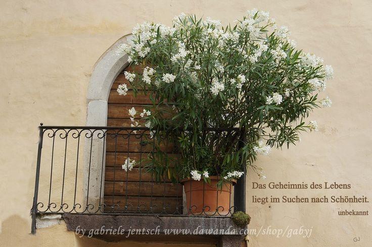 karte spr che zitate balkonien von photogl ck auf gru karten mit mediteranem. Black Bedroom Furniture Sets. Home Design Ideas