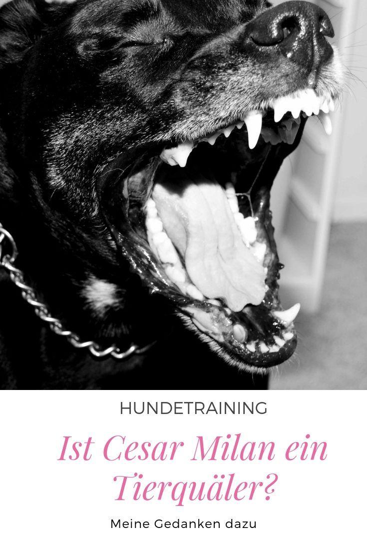 Cesar Milan Hundeflusterer Oder Tierqualer Hundetraining Hundchen Training Hunde Korpersprache