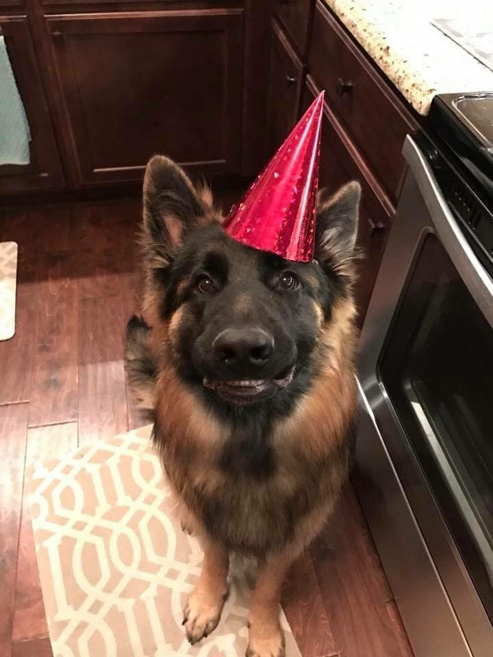 Happy Boi On His Birthday Who S A Good Boy Pinterest Dogs