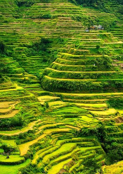 Banaue rice terraces,  Philippines by Sam Stradling G+