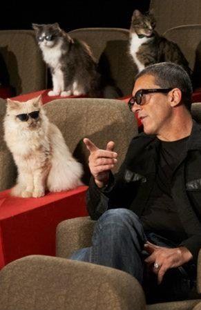 Antonio Banderas, super sexy cat lover.