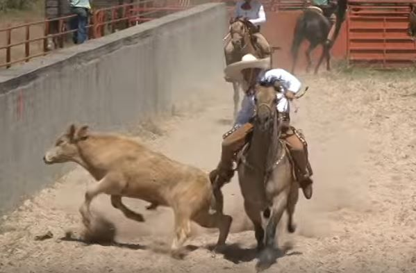 A rodeo event where the tails of bulls are ripped and pulled by cowboys is about to take place in Colorado. Bulls typically experience broken tails or even dismemberment during this sick event. Sign this petition to demand that the cruel event is canceled.