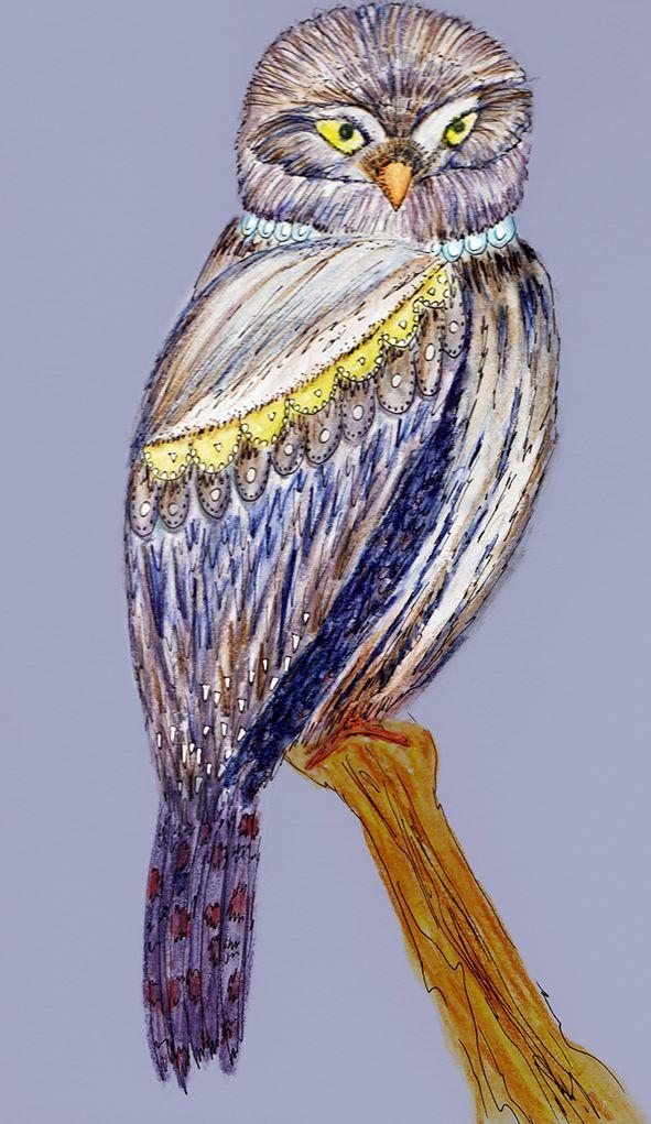 Aves emblemáticas chilenas: Chuncho Isabel Cerda www.isabelcerda.com