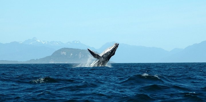Región de Aysén #pinChile #fauna
