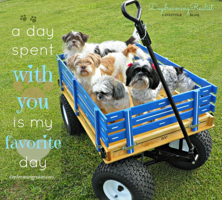 Daydreaming Realist. A day spent with you is my favorite day. #Quotes #dogs #bestfriends