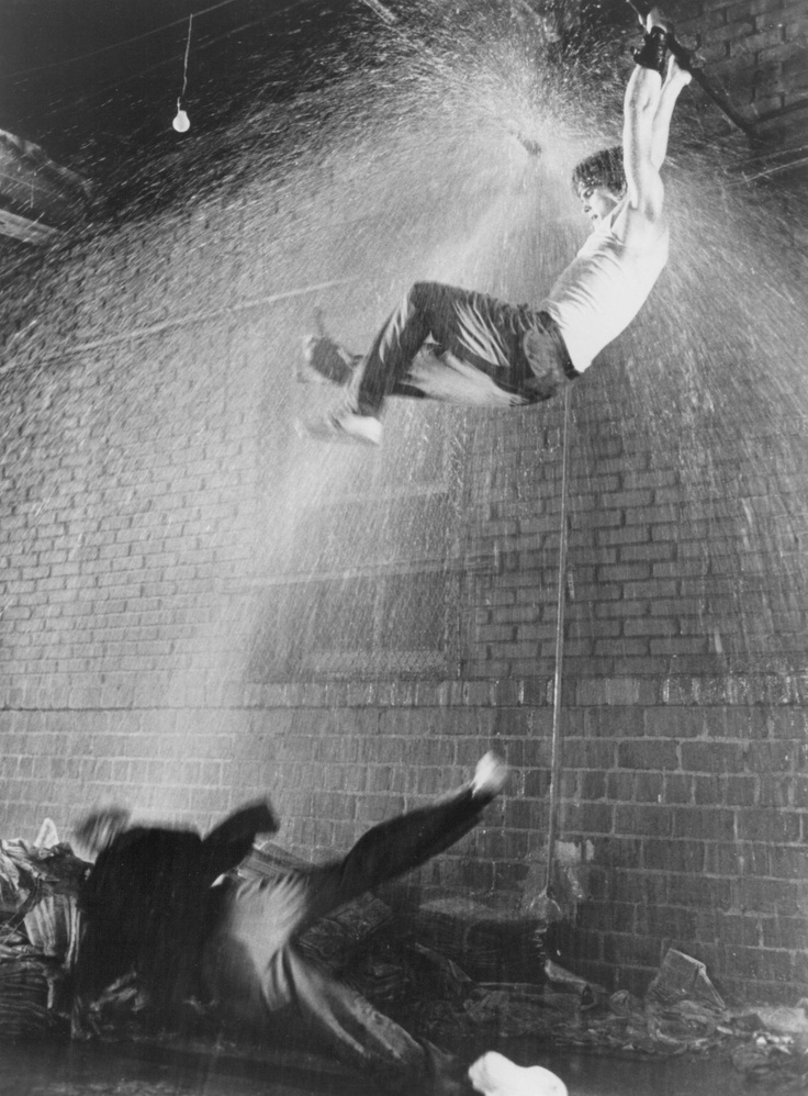 37 best images about rumble fish on pinterest the for Rumble fish novel