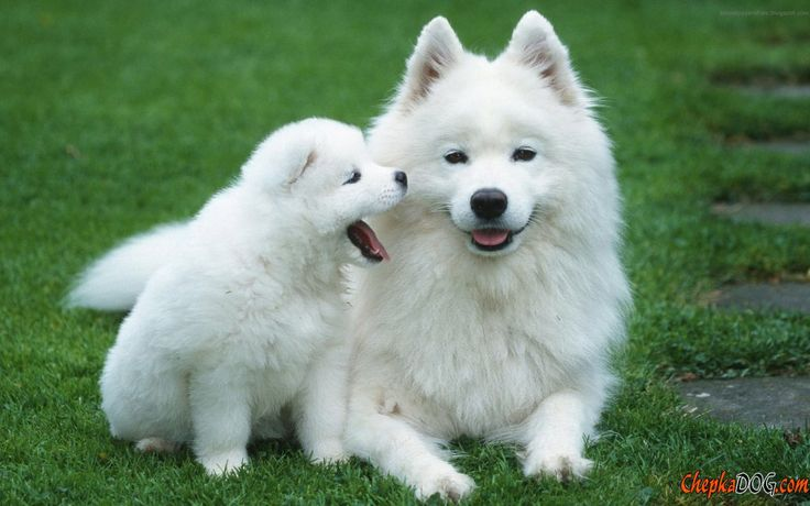 Dog and puppy nosy