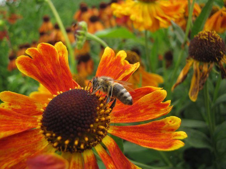 Diese 7 Pflanzen Sind Ein Paradies Fur Bienen Bienen Diese Ein Fur Paradies Pflanzen Blumen Pflanzen Bienen Freundliche Blumen Bienenfreundliche Blumen