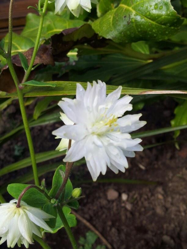 A splash of white in the garden.
