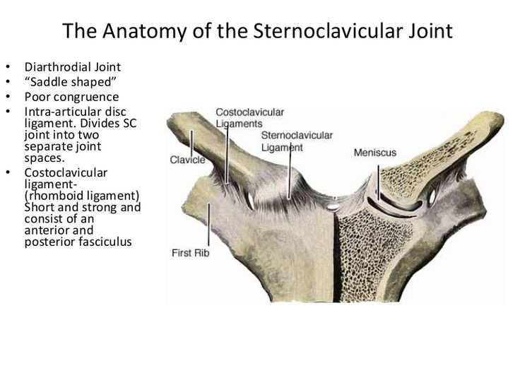 Sternoclavicular Joint Massage Therapy Anatomy Health