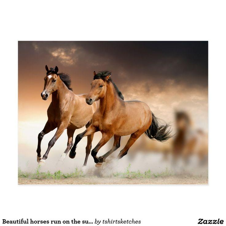 Beautiful horses run on the sunrise postcard