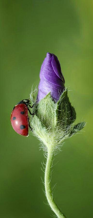 Lady Bug and flower - TuckawayTrail