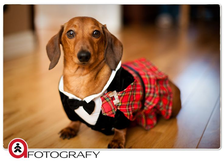 Herman in wedding kilt.