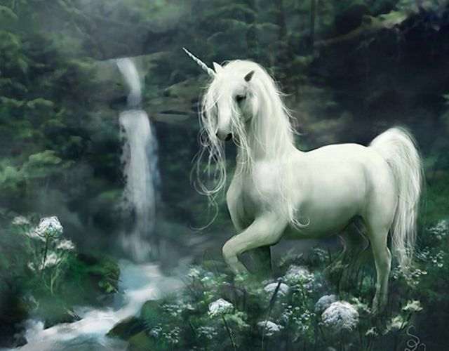 Unicorn <3