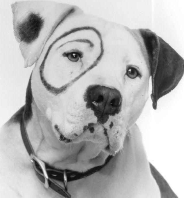 Old Rascal Dog Name