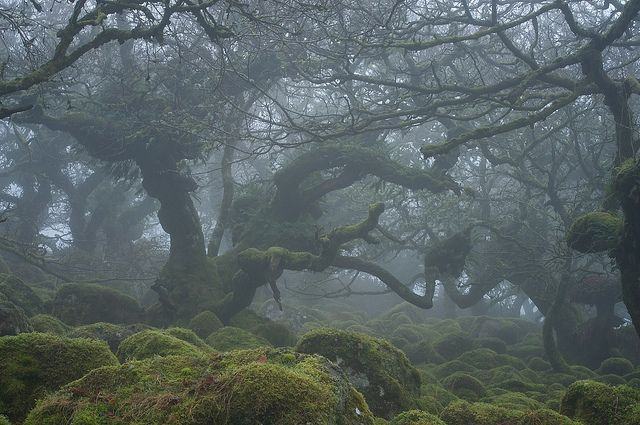 Haunted forests of Dartmoor National Park in Devon, England (by Duncan George).