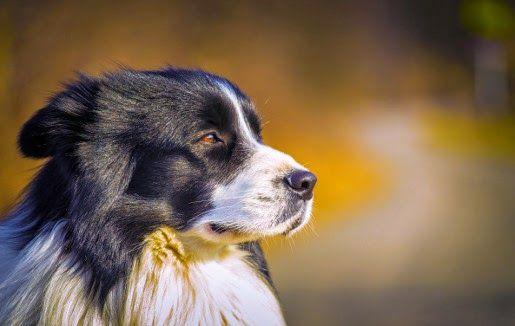Co zrobić, gdy #pies linieje?