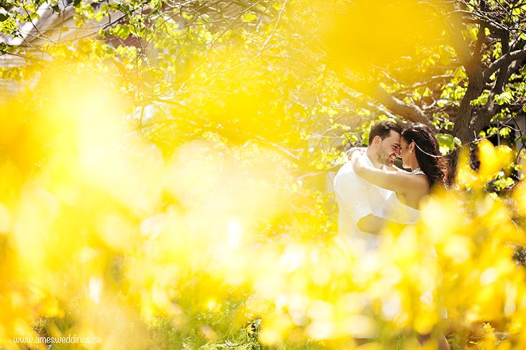 Engaged couple amongst yellow flowers. Ames Photography » Specializing in Innovative Wedding & Portrait Photography in London Ontario.