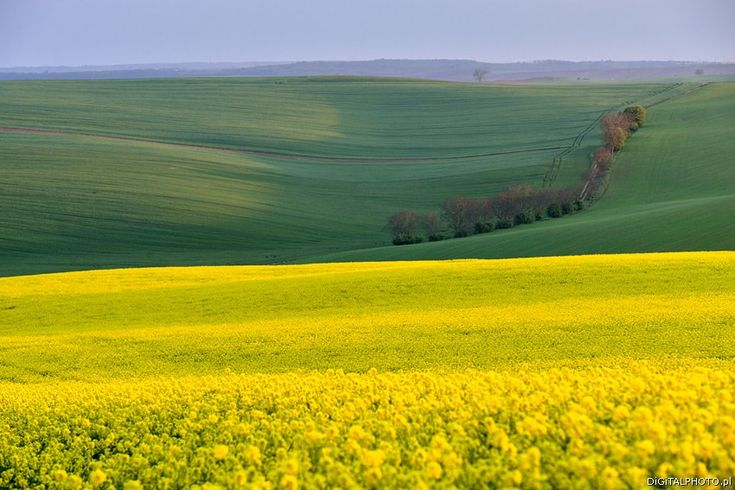 South Moravia landscapes