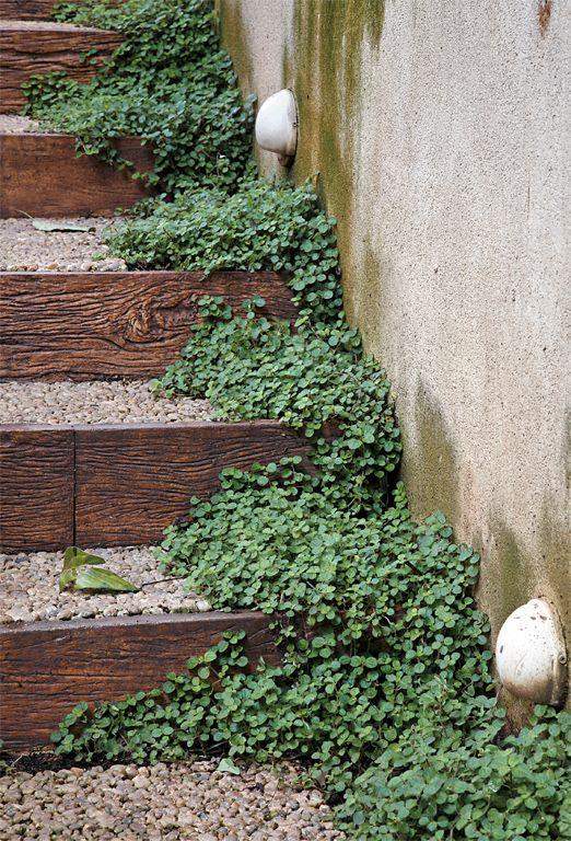 Plantas que dão o acabamento gracioso a canteiros e vasos.