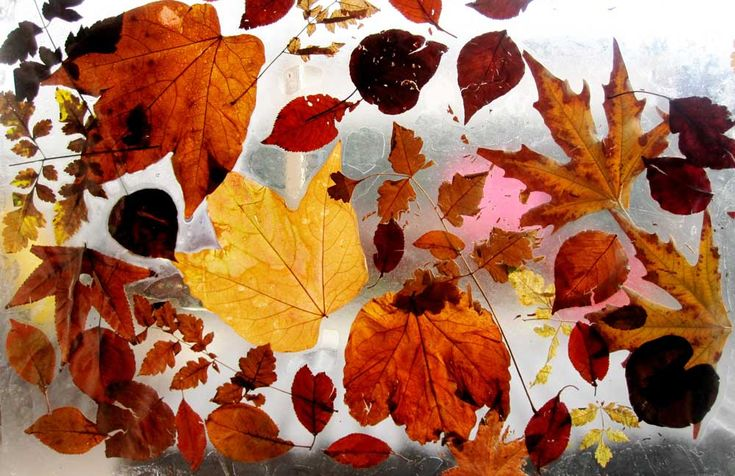 Autumn art and craft ideas for kids.  Turn those leaves that are starting to fill your gutters, driveways and gardens into a fun activity for the kids. Arrange them on some clear contact and stick onto a window. Now that's an easy one!