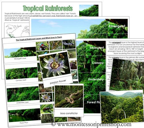 Tropical Rainforests - charts, picture cards, information cards on the 4 layers of tropical rainforests.