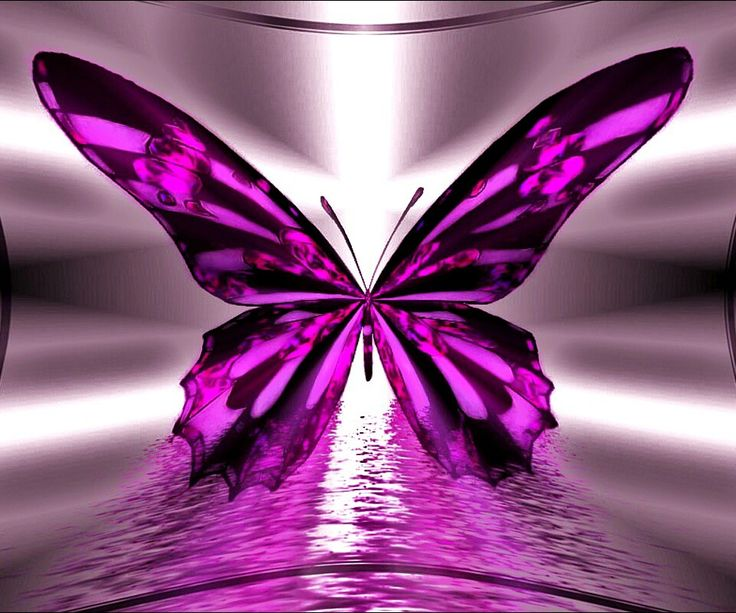 152 Best Images About Zedge Stuff On Pinterest: 28 Best Images About Butterflies On Pinterest