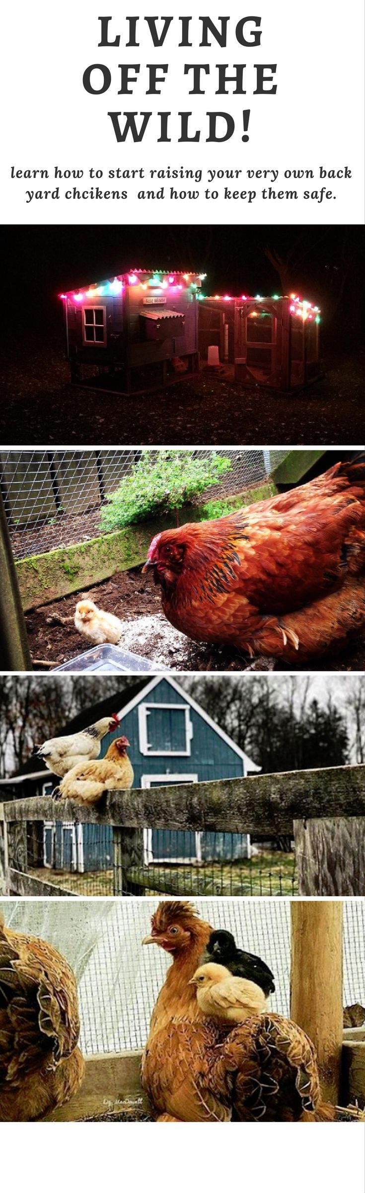 651 best chickens images on pinterest raising chickens backyard