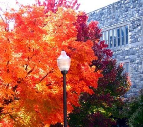 Virginia Tech.
