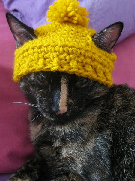I recently found this amazing post  with a pattern for a cat beanie, and I naturally thought it was the most amazing thing in the entire wor...