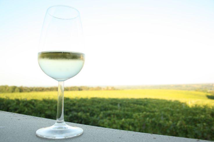 Dalla terrazza della Tenuta Pernice, beviamo un bicchiere di Ortrugo guardando il mare di vigneti sottostante #vino #vtwf #valtidone #piacenza
