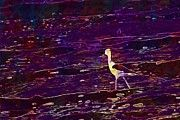 "New artwork for sale! - "" Black Winged Stilt Bird Common Stilt  by PixBreak Art "" - http://ift.tt/2uMycH2"