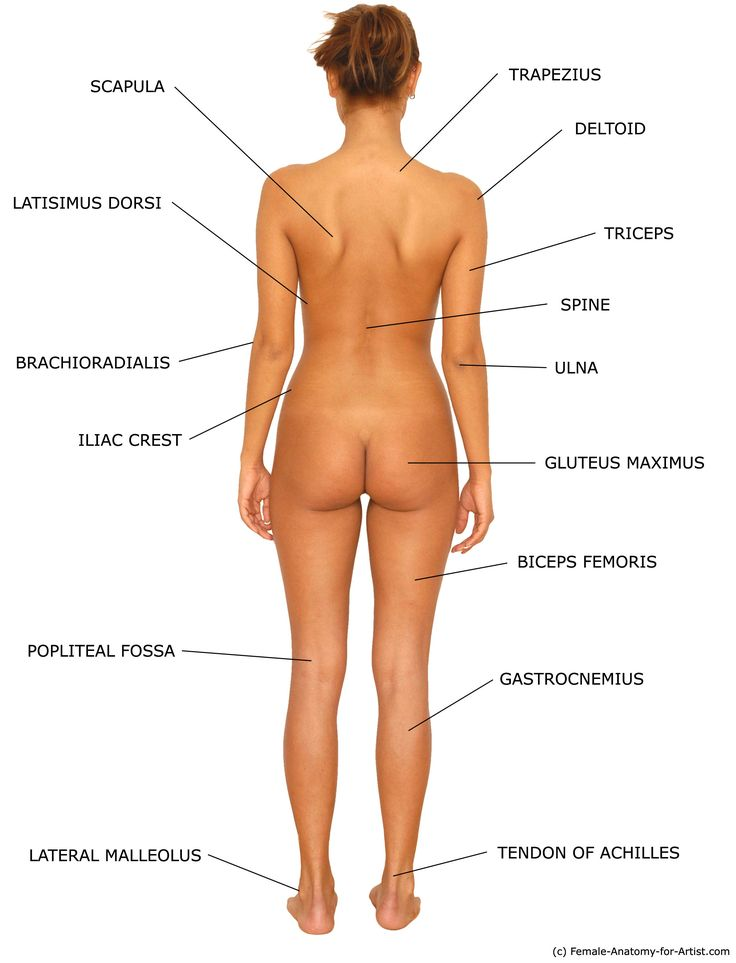 parts Female human body