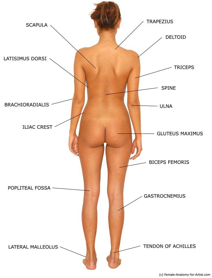 Anatomy Ass 116