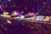 """New artwork for sale! - """" Turtles Sun Pond Animal Reptile  by PixBreak Art """" - http://ift.tt/2vaDtIY"""