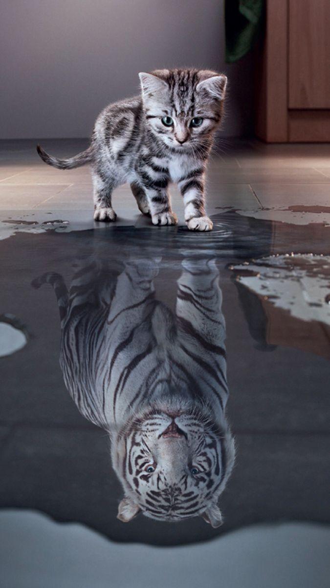 Wallpaper Tiger Kitten Ipad Iphone Android Cute Cat Wallpaper Kitten Wallpaper Animals Beautiful