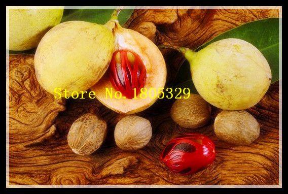 Hot Sale Myristica fragrans Houtt Seeds Outdoor Very Easy Sementes De Flores Seeds Sweet Fruit Vegetable Organic Fresh 10PCS