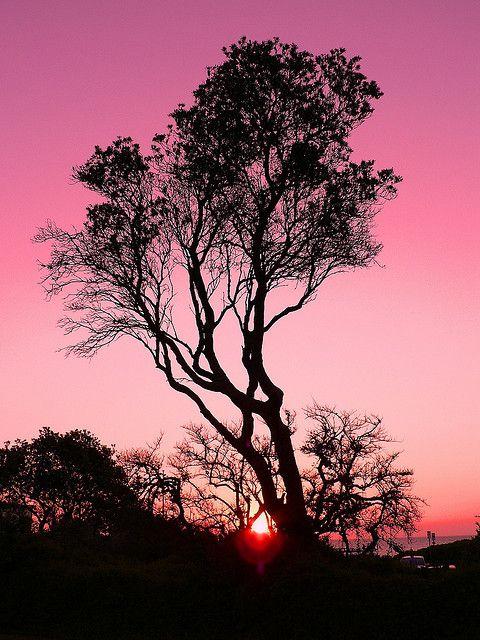 ✯ Pink Sunset
