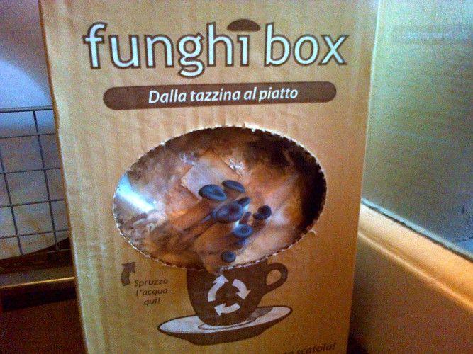Funghi Ostrica Funghibox. Giorno 3. #funghi #faidate #coltivare #kit #pleurotus #orto