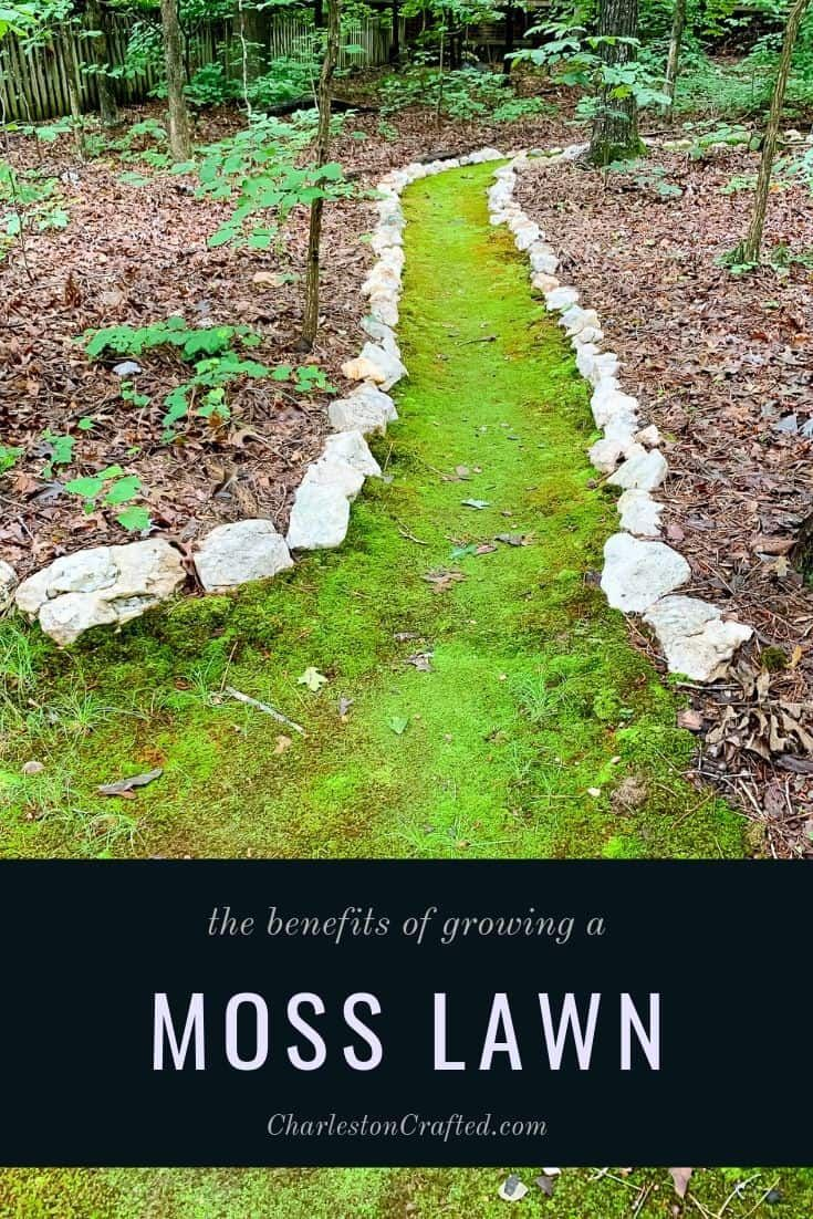 How To Grow Moss In Your Yard Growing Moss Moss Lawn Lawn