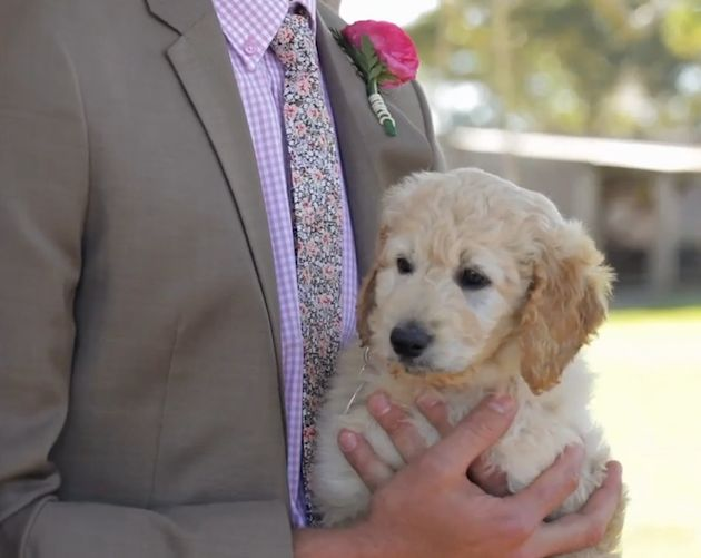 This groom surprised his bride with puppy she'd always wanted at the end of the aisle! I would die!