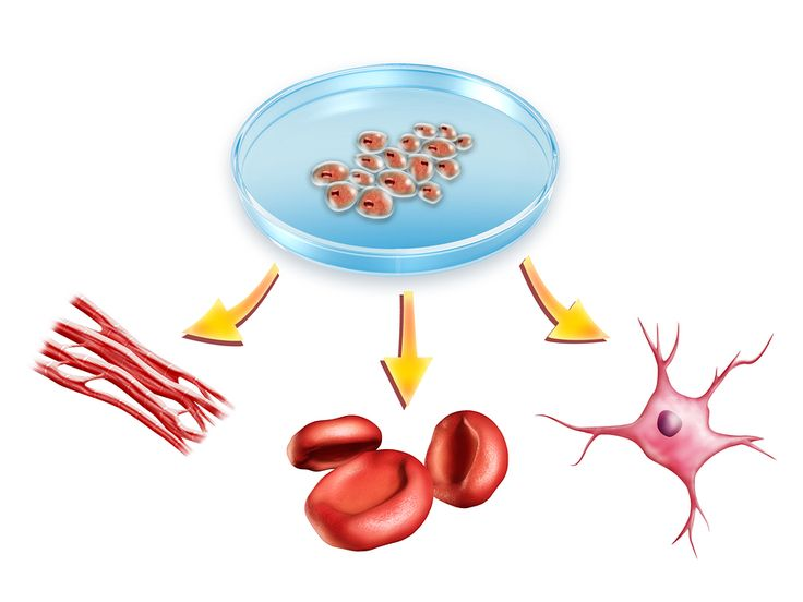 4 Reasons How Stem Cell Storage Help in the Future
