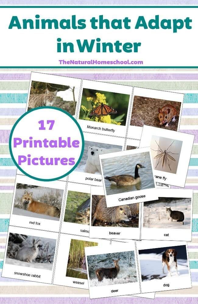 1000 ideas about Printable Pictures