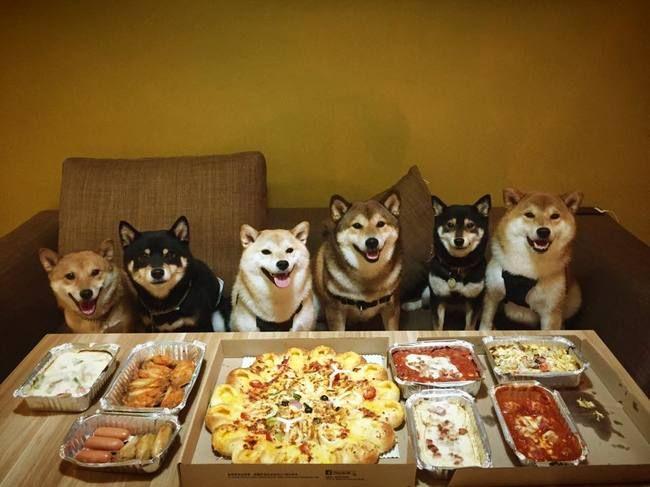 柴犬の家族写真wwwwww