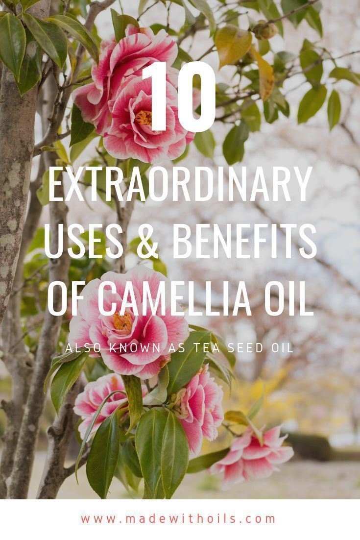 10 Extraordinary Uses Benefits Of Camellia Oil Tea Seed Oil Made With Oils In 2020 Camellia Oil Essential Oil Beauty Essential Oils Work