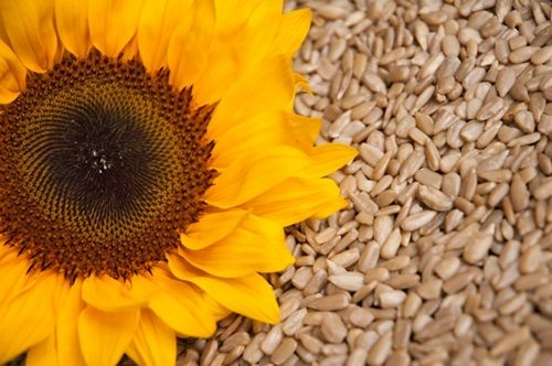 Six Health Benefits Of Sunflower Seeds Health Care Pinterest