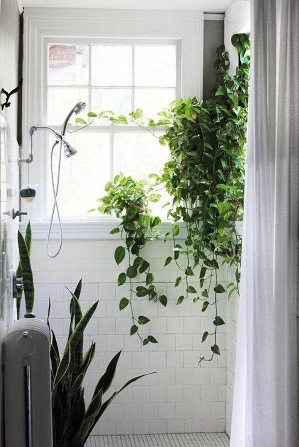 feutute badezimmer pflanzen dunkle räume